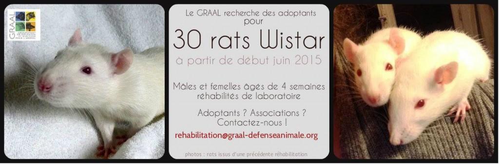 Rats Wistar - juin 2015