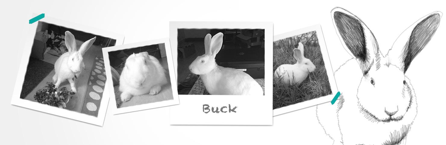 Buck (réservé)