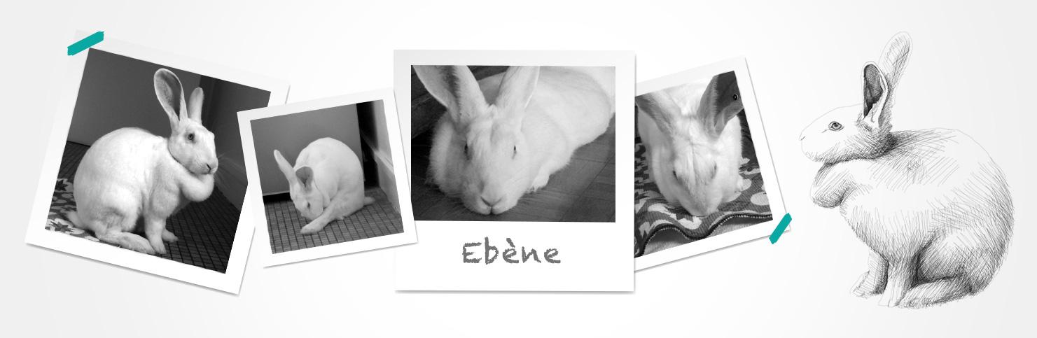 Ebène (réservée)