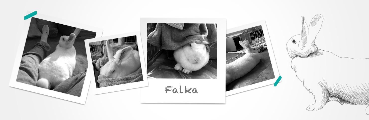 Falka